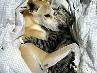Warning: What This Kitty and Dog Do Might Be the Cutest Thing Ever - Click Here!