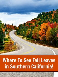 Your complete guide to over 15+ places in Southern California to see fall foliage and leaves!