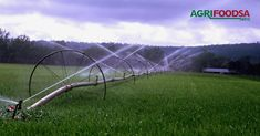 Agriculture, Farming, Right Time, Irrigation, Mistakes, South Africa, News, Water, Food