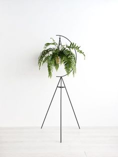 Crescent Plant Stand - Home Decoration Styling Modern Plant Stand, Diy Plant Stand, Plant Stands, Minimalism Living, Decoration Plante, Hanging Pots, Diy Hanging, Green Plants, Green Garden