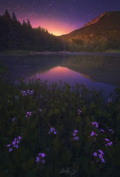 Fearful Symmetry - Photography by +Nicola Pirondini  http://bit.ly/1MlrJSb Spectacular moonrise at Calamone lake in the north of Italy. #night #flowers #lake