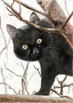 """El Gato dijo: """"No soy un amigo, no soy un criado. Soy el Gato que camina libre y que desea ir a tu Cueva"""" Rudyard Kipling"""