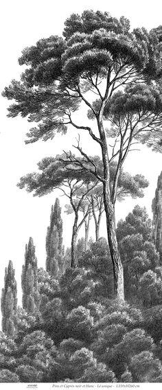 Lé unique - Pins et Cyprès noir et blanc - Lé unique L110xH260 cm - Ultra mat