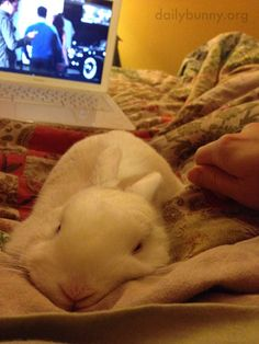 Bunny gets cozy with human - May 3, 2017