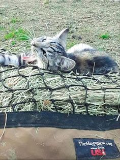 We all need a relaxing #sleepysunday to end the week - even the barn kitties! 🐈❤️ #barncat Zebras, Farm Animals, Photo Galleries, Creatures, Kitty, Horses, Pillows, Little Kitty, Kitty Cats