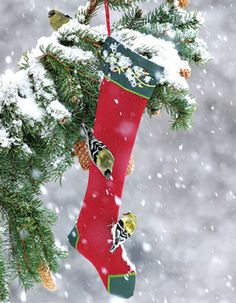 Nyjer Finch Holiday Stocking draws lots of winter goldfinches when filled with seeds.