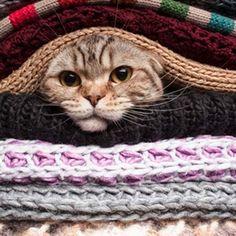 Good Jeder Katzenbesitzer kennt das Problem mit den hartn ckigen Haaren auf der Kleidung Katzenhaare entfernen aus