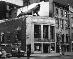 The Lone Star Cafe (on the corner of East 13th Street & Fifth Avenue in NYC) was a live music venue most famous for having a giant replica of an iguana perched on the roof. After 13 years, the iguana turned up at Pier 25 on the Hudson River (across from N.Moore Street in TriBeCa). The Lone Star eventually closed its doors; morphing twice before becoming Mr.Fuji's Tropicana in the early 90's .