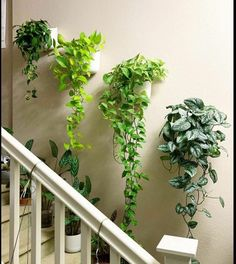Indoor Gardens For Your Home Inside Plants, Room With Plants, House Plants Decor, Plants On Walls, Indoor Plant Wall, Indoor Plants, Wall Garden Indoor, Hanging Plant Wall, Balcony Garden