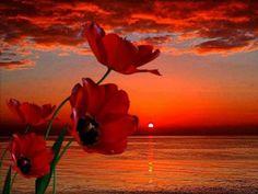 Sevenlerinin Dilinden Efendimiz (sas) – İbrahim TENEKECİ | Siyer-i ...