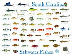 Show joe nebraska game and parks commission fish for South carolina fish species
