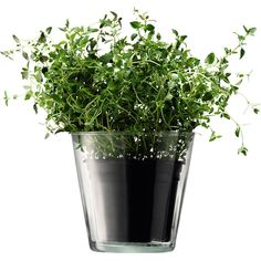 mia herb pot 15cm By lsa international | Designer vases (340 CZK) found on Polyvore