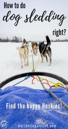 How to do the dog sledding in Scandinavia? Find the happy Huskies for a great Husky safari in Norway! Norway travel winter bucketlist, top things to do in Norway | Worldering around #Norway #winter