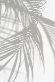 Travel | Palmtrees | Shadows | White | More on Fashionchick.nl