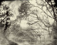 Sally_Mann_Georgia_01