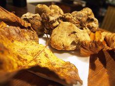 Il #tartufo evoca profumi e sapori… per chi li ama. Evoca natura, piante e boschi. #livesavignotruffle #bologna