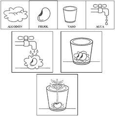 Germinación de la planta para colorear - Imagui                                                                                                                                                      Más Science Topics, Science Worksheets, Teaching Science, Teaching Tips, Plant Lessons, Bilingual Classroom, Teaching Spanish, Spanish Class, Circle Time