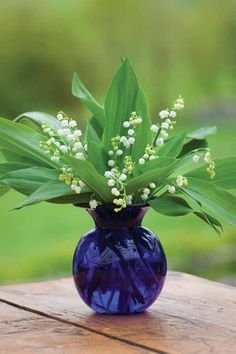 Lilly of the Valley - proof that blue & green do go together (contrary to popular belief!)