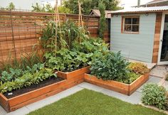 Small-space Food Garden Design Secrets - BCLiving
