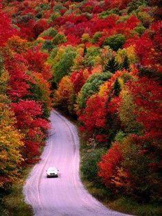 Autumn drive…