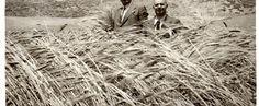 I vantaggi del consumo di grani antichi siciliani: meno glutine e meno intolleranze
