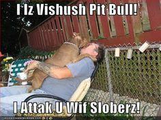 Hello Sweetie! Slobber me next Please! I need some Pit Bull Slobber!