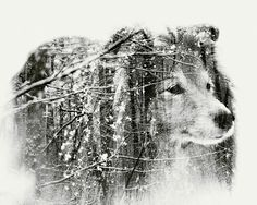 Multiple exposure portraits by Christoffer Relander, a graphic designer and self-taught photographer based in Raseborg, Finland. Silhouette Photography, Image Photography, Inspiring Photography, Inspiring Art, Creative Photography, Photography Ideas, Exposition Multiple, Multiple Exposure Photography, Dual Exposure