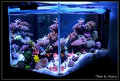 The bottom of the tank is covered with about 12 cm of live… Saltwater Aquarium Setup, Coral Reef Aquarium, Aquarium Design, Saltwater Tank, Marine Aquarium, Saltwater Fishing, Aquarium Ideas, Aquascaping, Coral Fish Tank