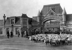 stockyards chicago | Chicago Stockyards - 1905* (Chicago is in the Midwest afterall)
