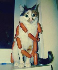 From the WTF files, a cat with a hot dog necklace. Some things just can't be explained ...