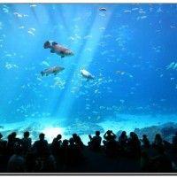 Hotels near georgia aquarium atlanta ga