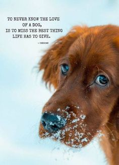 Tips To Know For Sure - Funny Dog Quotes - To never know the love of a dog is to miss the best thing life has to give. Dog Quotes The post Does My Dog Know I Love Him? Tips To Know For Sure appeared first on Gag Dad. Boy Dog, Dog Mom, Video Ed, I Love Dogs, Cute Dogs, Animals And Pets, Cute Animals, Amor Animal, Cockerspaniel