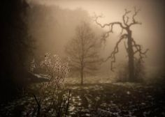 """I feel the flow towards the low I have to go - Moody and haunting foggy scene 8x12"""" fine art photography print by shashamane for $35.00"""