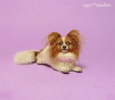 She is a scale dog. English Spot Rabbit, Baby Walrus, American Eskimo Dog, Papillon Dog, Miniature Dogs, Thing 1, Maine Coon Cats, Ponds, Dollhouse Miniatures