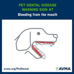 If your pet is bleeding from the mouth, talk with your veterinarian. For more information about pet dental health and the importance of preventive dental care, visit avma.org/PetDental.
