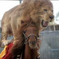 The 25 Greatest Pictures of Animals Riding Other Animals Anything