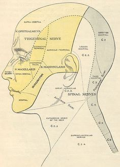 sensory innervation in the face