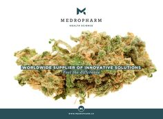 It is our pleasure to present you two new hemp-strains, which exhibit no psycho-active effects. This is ensured by a high cannabidiol (CBD) content with only trace amounts of tetrahydrocannabinol (Δ9-THC <0.8%). As pioneers regarding the introduction of medicinal cannabis into medical therapies, it is our main focus to guarantee an uncomplicated and reliable treatment to patients suffering from various afflictions. #thc #medicalcannabis #cannabidiol #cbd #marijuana #medicalmarijuana Cancer Cure, Medical Cannabis, Exhibit, Hemp, The Cure, Content