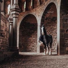 Be like Shire Horse Glory: A Queen with her own kingdom! | Love thinking back to when I had this special shoot in a German ruin. . . . . #pferdefotografie #huffpostgram #liveunscripted #animalphotography #exploremore #lookslikefilm #createexplore #artofvisuals #horsephotography #horsesofinstagram #agameoftones #lifeofadventure #igmasters #liveauthentic #chasinglight #justgoshoot #animallovers #makemoments #finditliveit #equine #loveanimals #shirehorse #germanroamers #weroamgermany #Regram