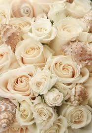 champagne colored roses - Google Search