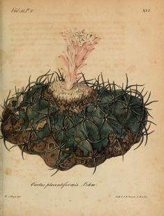t.16=Bd.8 (1832-1833) - Nova acta physico-medica Academiae Caesareae Leopoldino-Carolinae Naturae Curiosum - Biodiversity Heritage Library