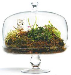 terrarium in a cake stand