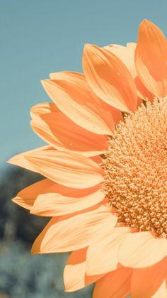 Flower Background Wallpaper, Flower Phone Wallpaper, Scenery Wallpaper, Cute Wallpaper Backgrounds, Wallpaper Iphone Cute, Flower Backgrounds, Pretty Wallpapers, Phone Wallpapers, Cellphone Wallpaper