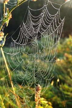 """What they trust in is fragile; what they rely on is a spider's web."" Job 8:14"