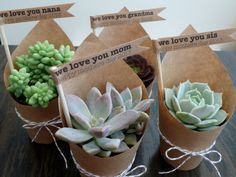Succulent Party Favors  Set of 5 by foundpurpose on Etsy, $30.00