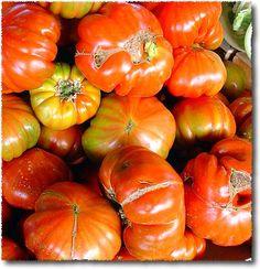 toskánská rajčata Costoluti