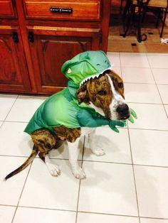 Cutest T Rex Ever!