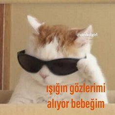 whatsapp sticker turkce komik sozlu gozluklu kedi Funny Jokes For Kids, Memes Funny Faces, Cartoon Memes, Funny Tweets, Funny Images, Funny Photos, Vanellope Y Ralph, Comedy Pictures, Neon Words