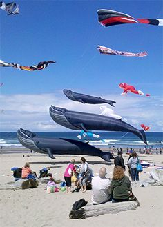 """The Lincoln City Fall Kite Festival is held on the beach, in the center of Lincoln City, at the D-River Wayside from 10am-4pm on Saturday and Sunday.  The weekend festival will include kite flying demonstrations by experts, free kids kitemaking, running of the bols, and some of the most colorful """"big"""" kites in the world!"""