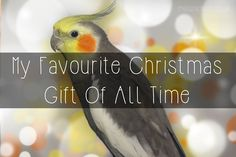 Miss Nicklin   Lifestyle, Events & Food Blog: My Favourite Christmas Gift Of All Time...